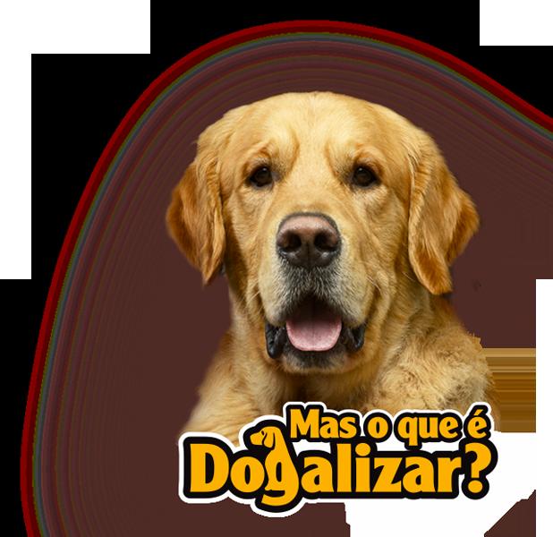 O que é Dogalizar - SpecialDog